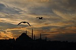 turkey, istanbul, animal