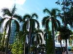 palm trees, city, sky
