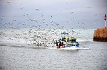 fishing boat, birds, seagulls
