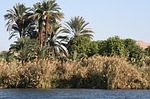nile, bank, travel