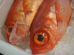 fish, market, japan