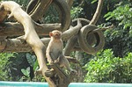 monkey, tree, zoo