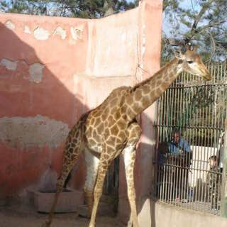 Alexandria Zoo, egypt , alexandria