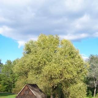 Upper Silesian Ethnographic Park, poland , auschwitz