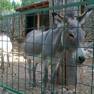 Split Science museum and Zoo, croatia , brac