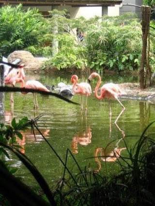 Cali Zoo, colombia , cali