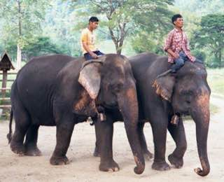 Elephant Nature Park, thailand , chiangmai