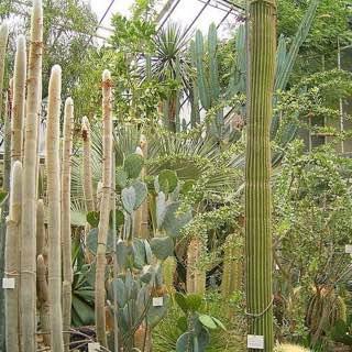 Botanischer Garten der Universität Heidelberg, germany , heidelberg