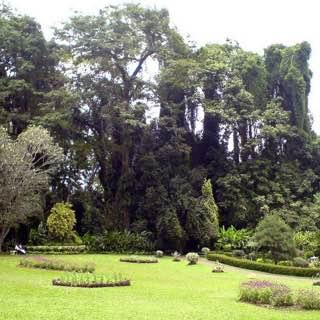 Royal Botanical Gardens, Peradeniya, srilanka , kandy