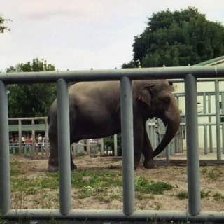 Kiev Zoo, ukraine , kyiv