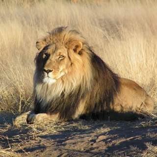 Lion Park, southafrica , pretoria