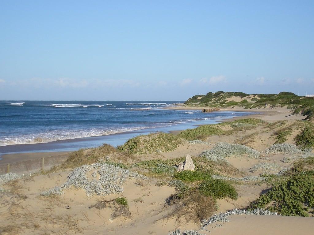 Pollock Beach képe. beach port elizabeth