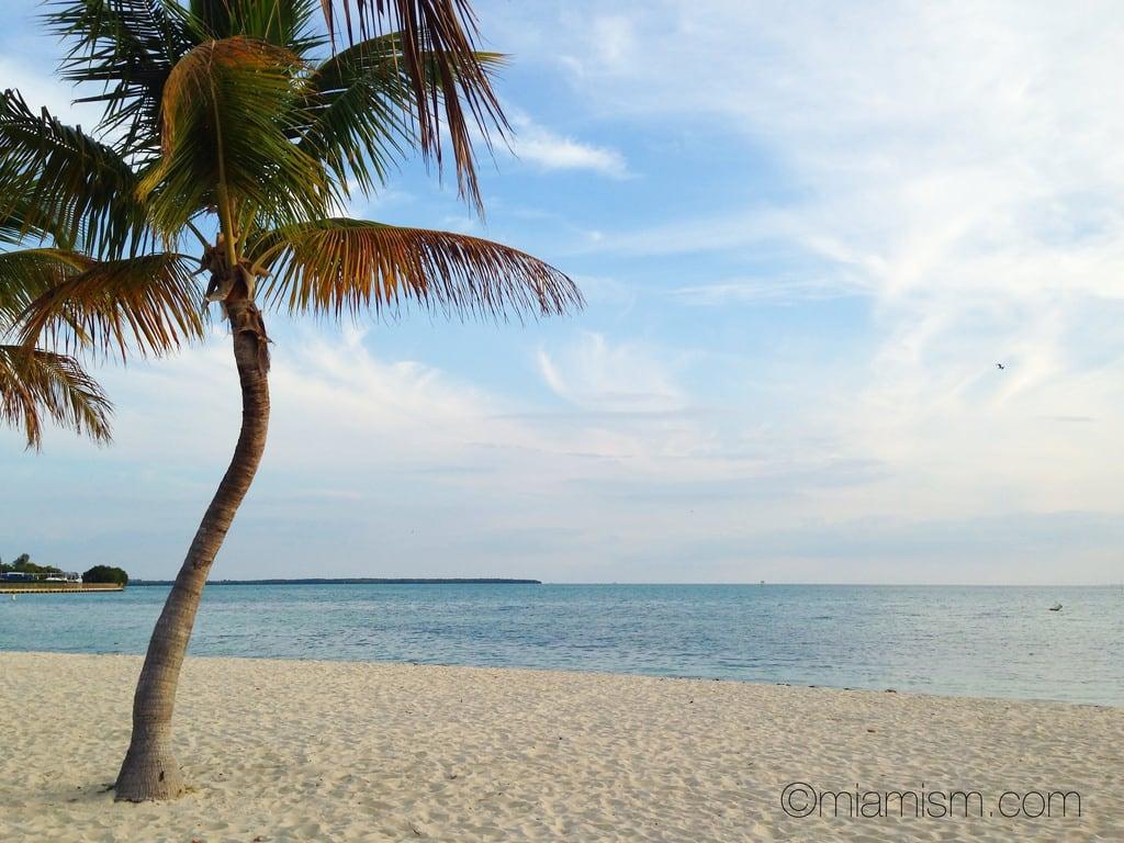Virginia Beach 의 이미지. ocean blue beach palms sand miamibeach keybiscayne miamiviews coconutpalms miamirealestate keybiscaynebeach miamisms miamipalms