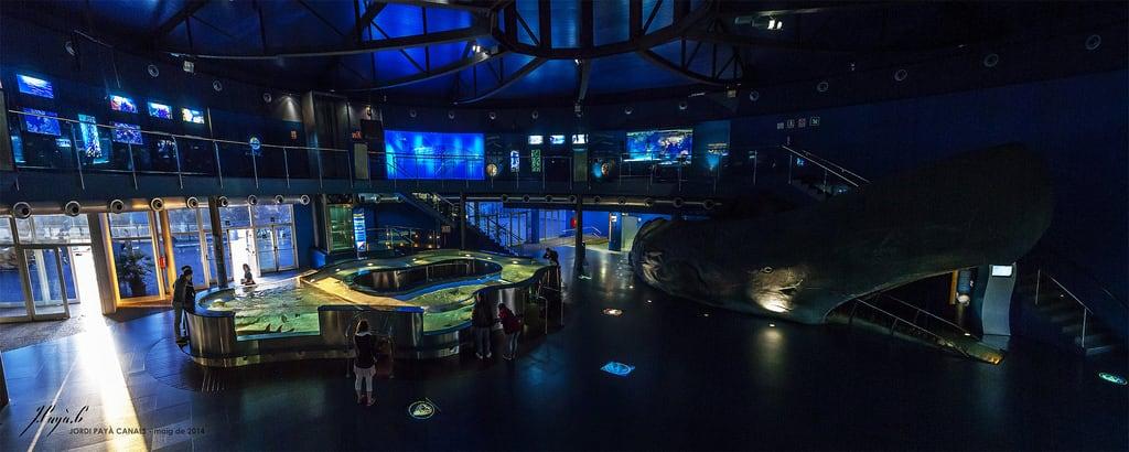 Εικόνα από Aquàrium. barcelona life sea panorama museum canon eos aquarium is underwater science catalonia canals whale usm jordi biology efs 450d 1585mm payà