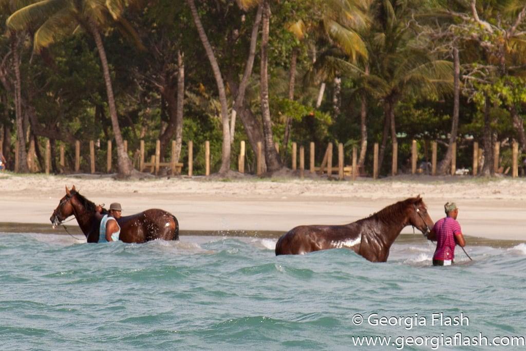 Imagen de Playa Arriba. beach dominicanrepublic horses miches river coast men cleaning washing