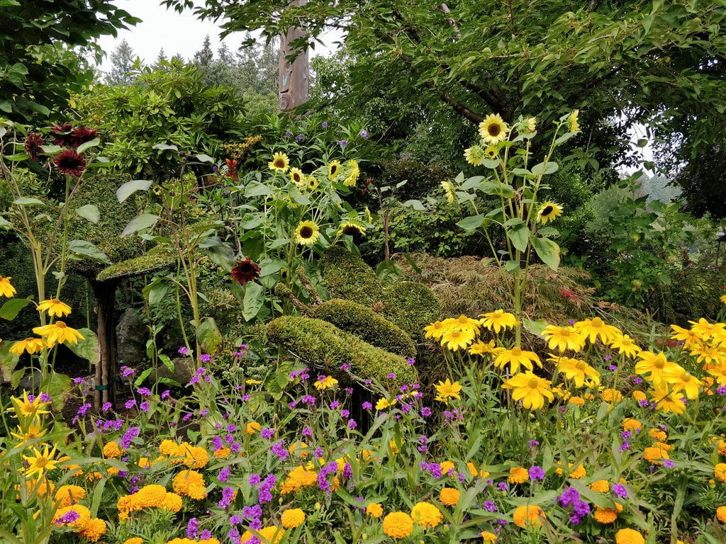 Image of The Butchart Gardens. butchartgardens brentwoodbay sunflowers marigolds flowerbed colourful