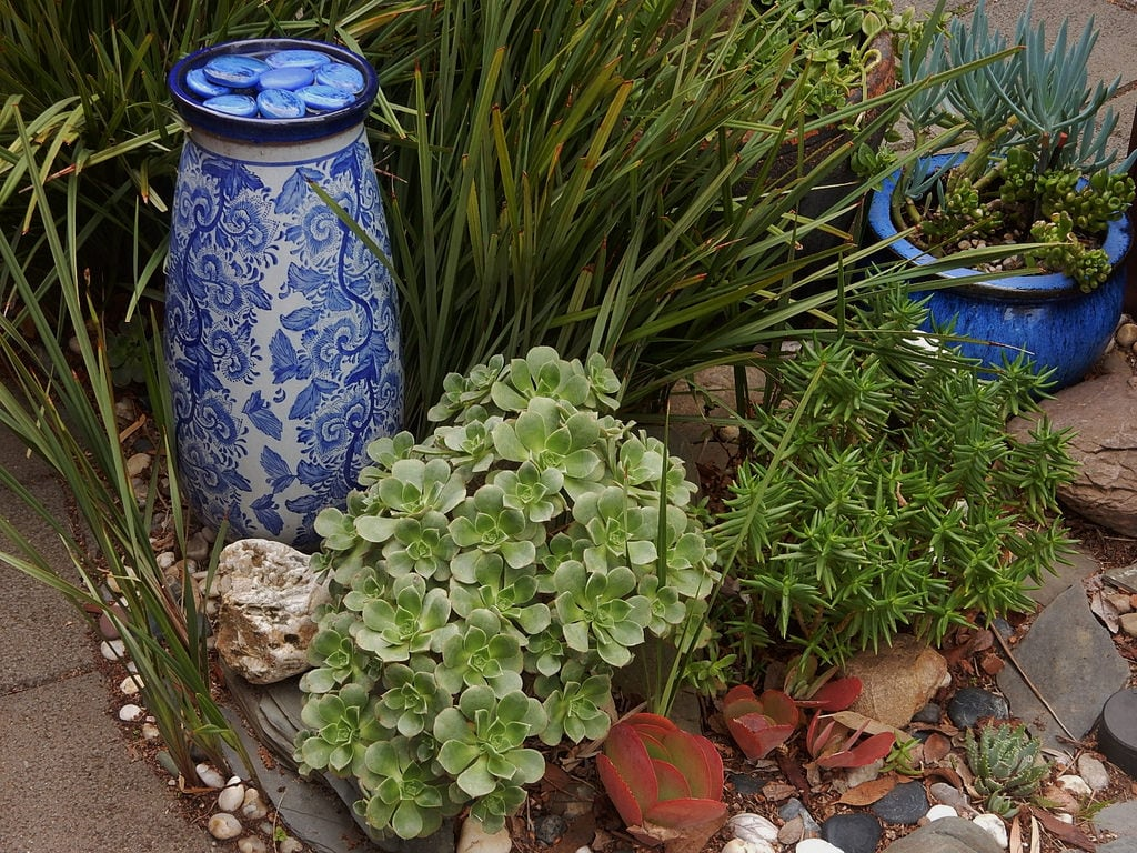 Image of Henley Beach near Henley Beach. henleybeach succulents display garden vase urn