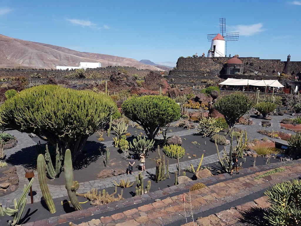 Billede af Jardín de Cactus.
