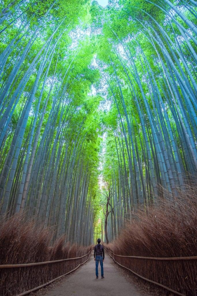 Billede af Arashiyama Bamboo Grove. arashiyama arashiyamabamboogrove asia honshu japan kansai kyoto kyotoprefecture bamboo bambooforest