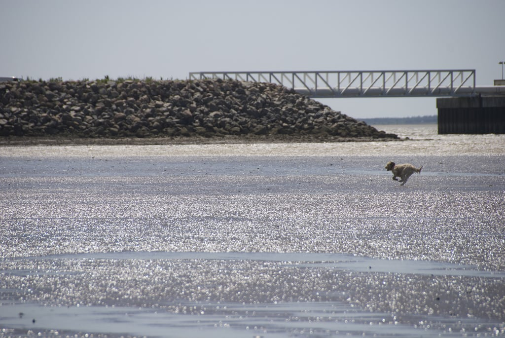 Image of Sædding Strand. beach denmark raw dudley esbjerg danmark