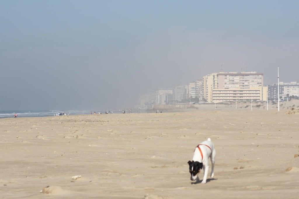 Playa de la Cortadura जवळ Cádiz की छवि.