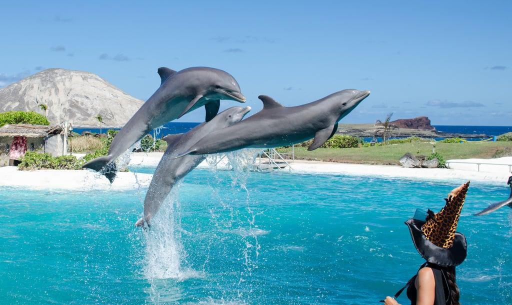 Image de Sea life Park Hawaii. life park blue justin red sea art water animals hawaii nikon dolphin ハワイ hawaiian seals sealifepark d90 tameron ornellas d7000 ornellaswouldgo 하화이