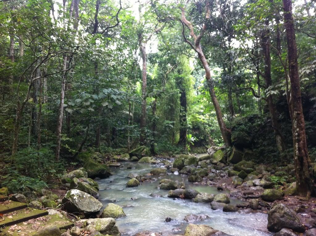 Bild av Makiling Botanic Gardens. mountain river laguna losbaños makiling