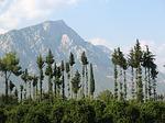 Zdjęcie:   Turcja  Riwiera Turecka  Kemer  (turcja, góry, drzewa)