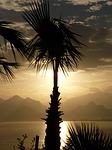 Zdjęcie:   Turcja  Riwiera Turecka  Beldibi  (palm, antalya, morze)